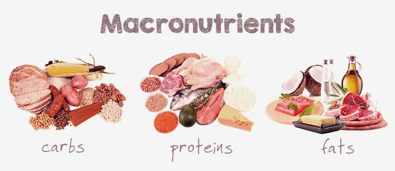 Macro-Nutrients